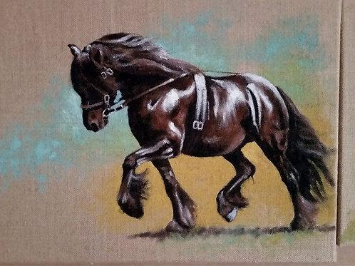 Dales pony stallion