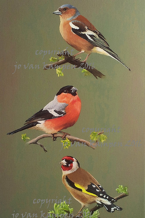 3 Finches, print.