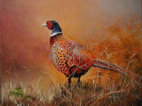 Pheasant in autumn.
