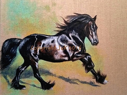 Dales pony cantering