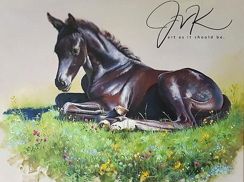 Black filly foal in a meadow.