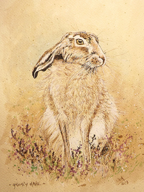 Grumpy Hare #2