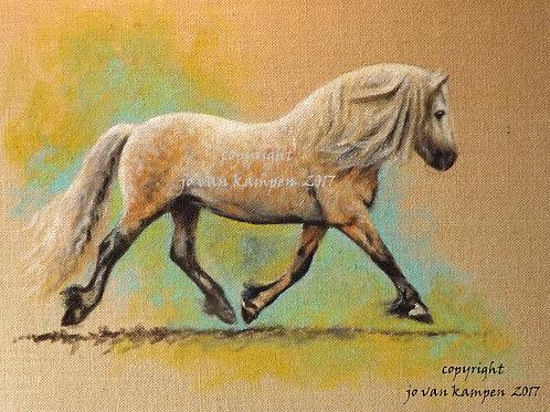 Highland pony, print.