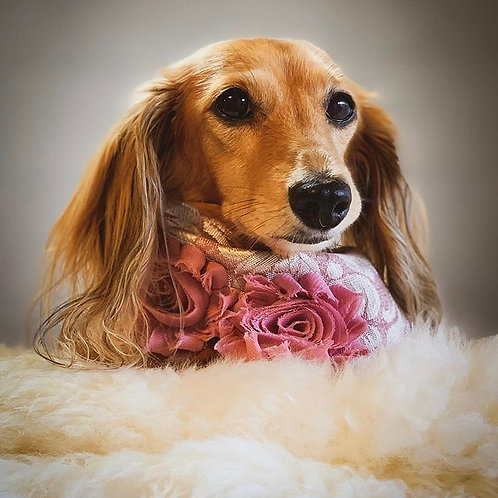 Pink Damask Roses Dog Bandana