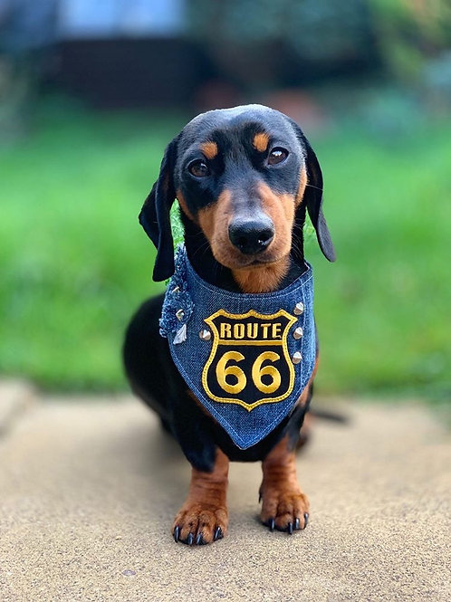 Route 66 Biker Dog Bandana