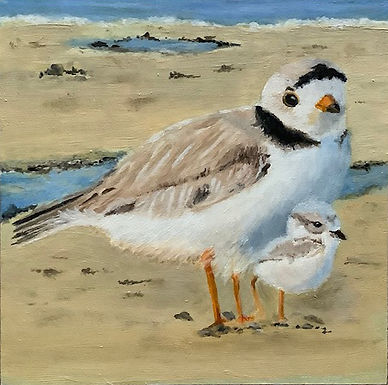 Plover and Chick