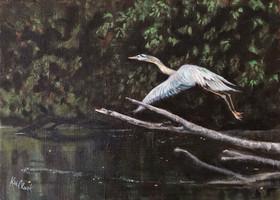 Blue Heron Takes Flight