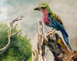African Roller Bird