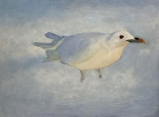 Ivory Arctic Dove