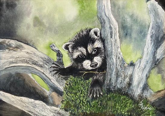 Raccoon Cub