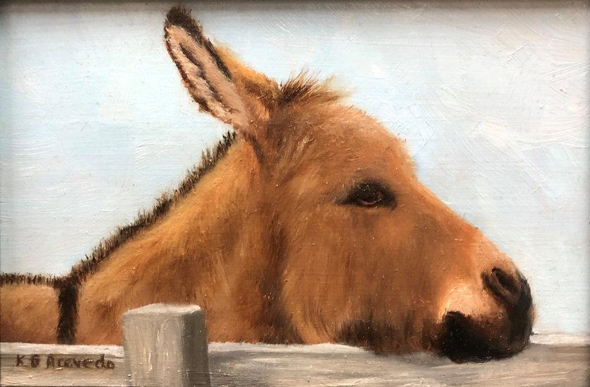 Portrait of a Sicialian Donkey