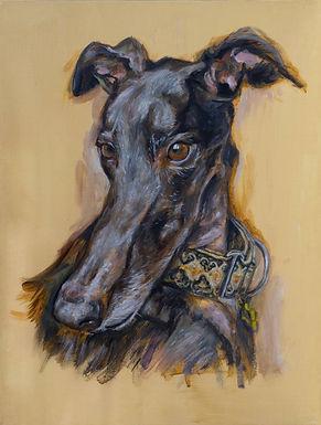 Duke the Greyhound