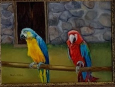 Colorful Parrots of Peru