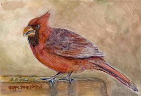 """Geraldine Pontius, """"Cardinal Study"""""""