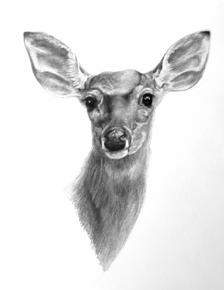 Portait of a Doe