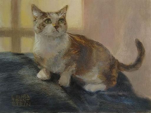 Cautious Cat