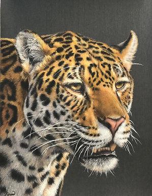Florida Jaguar