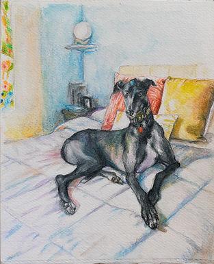 Royal Greyhound on Bed
