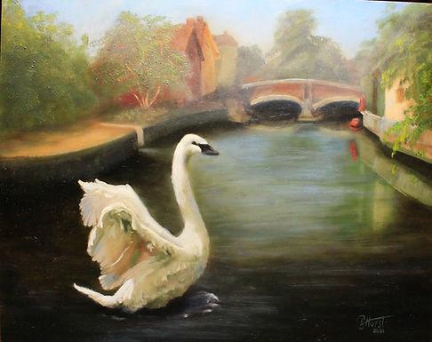 Swan at Fye Bridge, Norwich UK