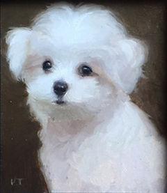 maltese_puppy.jpg