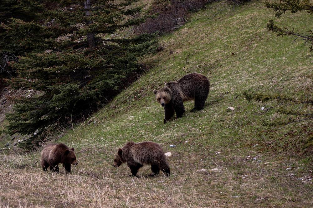 bear symbol russia
