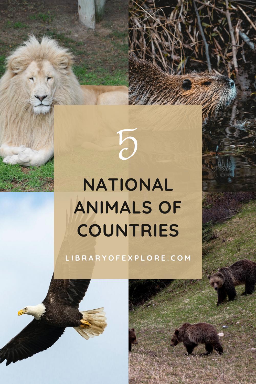5 Impressive National Animal Symbols of Countries
