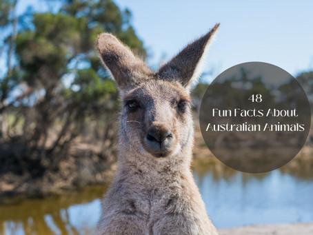 48 Fun Facts About Australian Animals  Wildlife of Australia