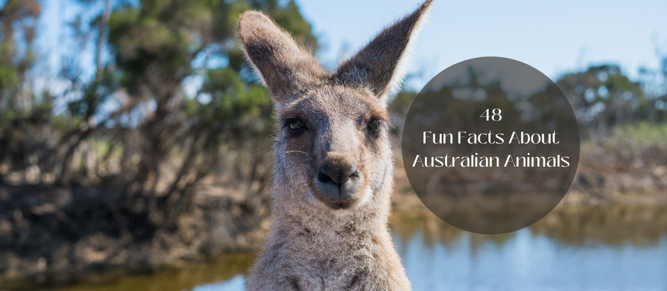 48 Fun Facts About Australian Animals| Wildlife of Australia