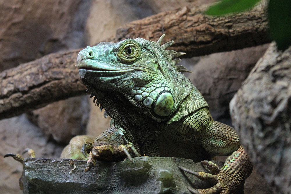 Interesting Facts About Amazon Forest Animals