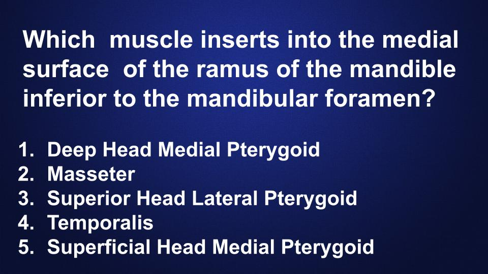 head-neck-anatomy-muscle-insertion-quiz-