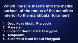 head-neck-anatomy-muscle-insertion-quiz-