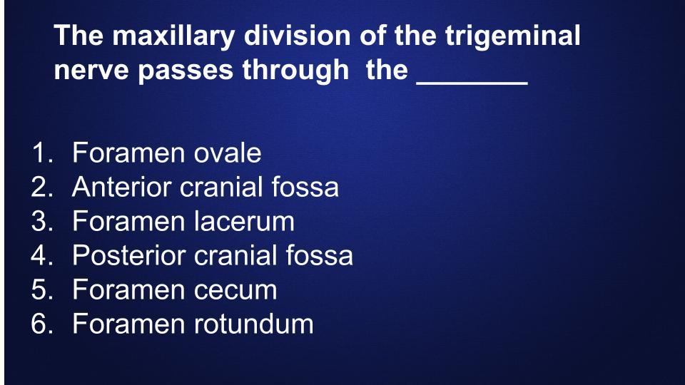 Dental-Hygiene-Flashcards-bones (12)