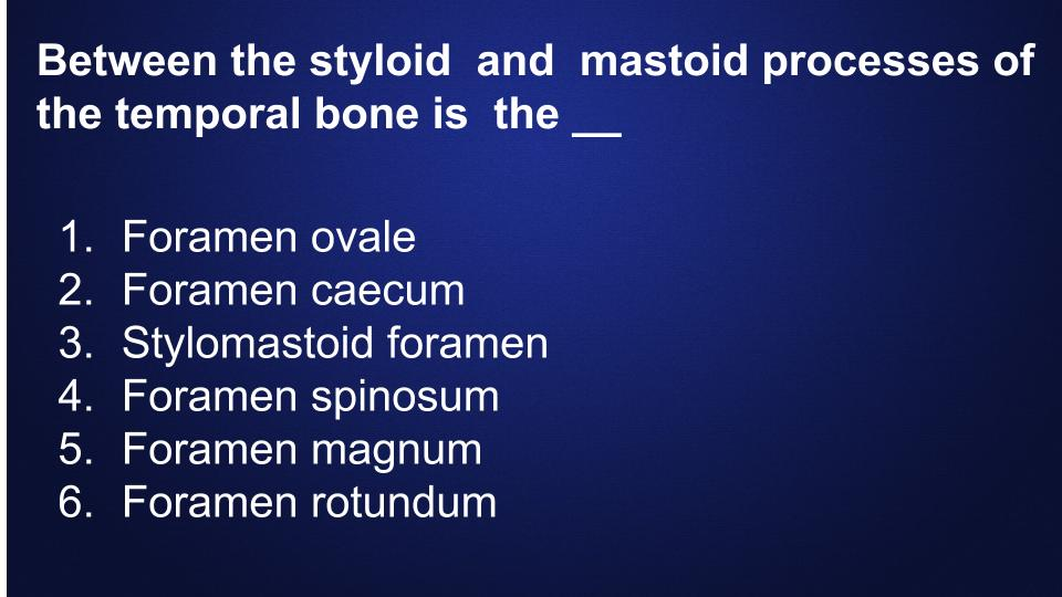Dental-Hygiene-Flashcards-bones (19)