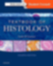 denrist-hygienist-histology.jpg