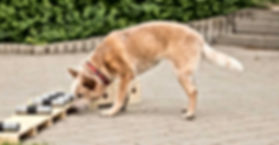 dog-nose-work-training.jpg
