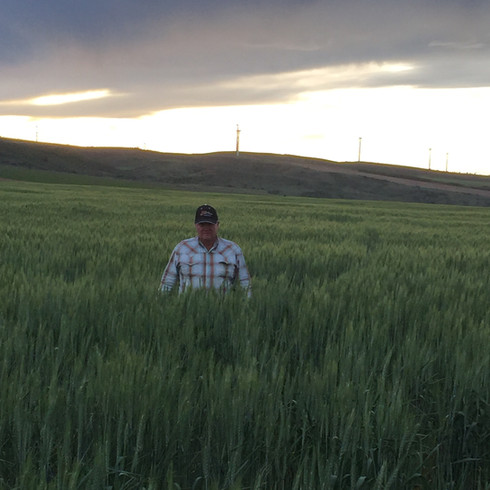 wheat (6).jpg