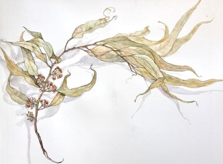 על יצירה / ענף אקליפטוס