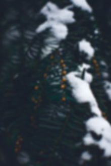 blur-christmas-christmas-tree-955795.jpg