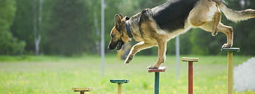 Ongoing-Dog-Training_f4545d8f-a058-4884-