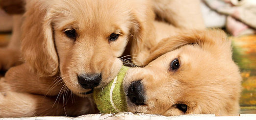 tpl001-services-puppy-party.jpg