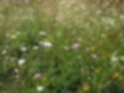 West field flowers KW.JPG