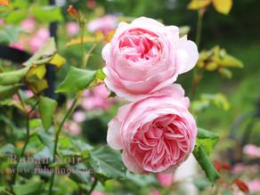 私のバラたちその2