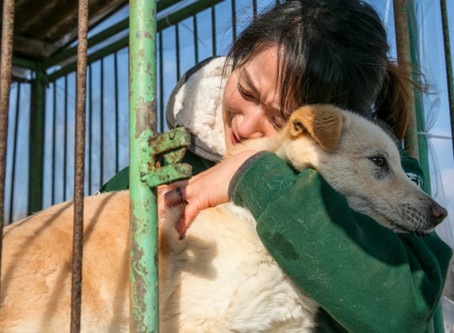 Dogs rescued from South Korean meat farm hoping to find new homes in Canada after COVID-19 eases