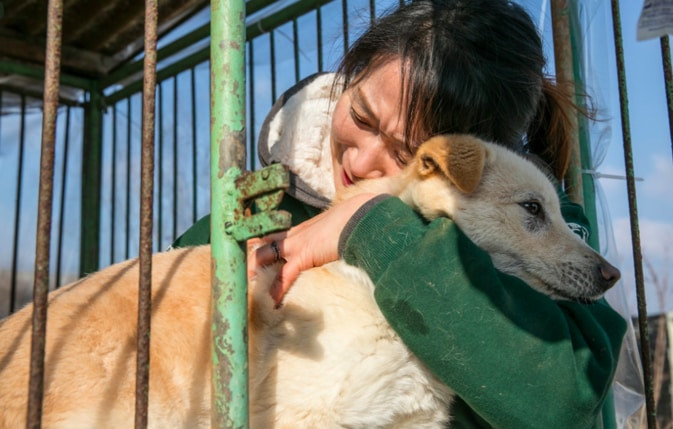 Dogs rescued from South Korean meat farm getting a hug