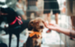 person-touching-brown-puppy-1904105 (3).