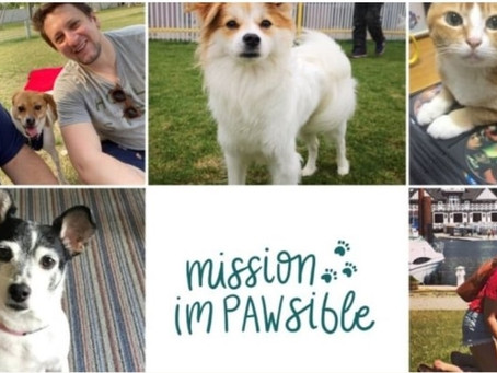 'Mission Impawsible' reunites Vancouverites with dogs they had to leave behind in China