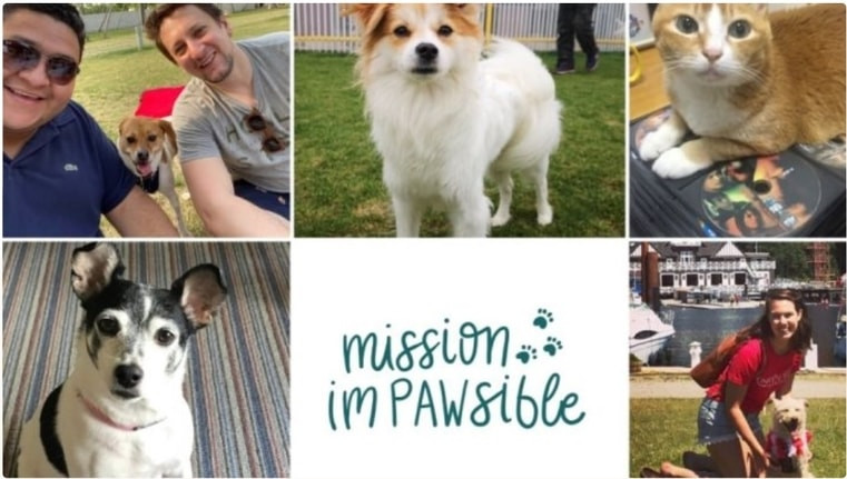 Mission Impawsible Vancouver project