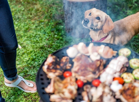 Tips for celebrating Canada Day with a dog-friendly BBQ