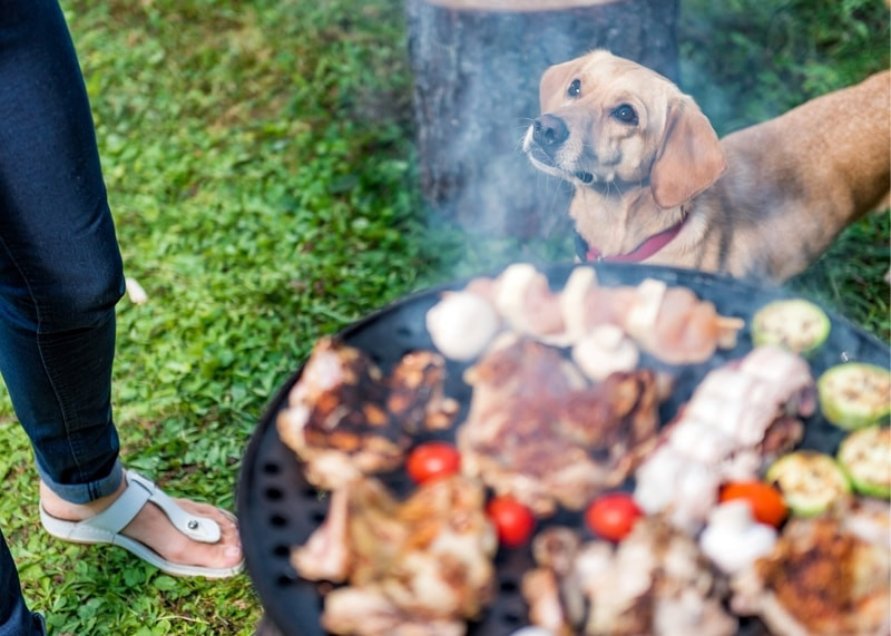 Doggy in a BBQ celebrating Canada Day