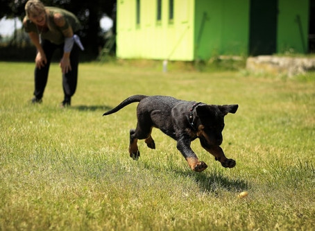 In B.C., dog training is unregulated. Here's what you need to know